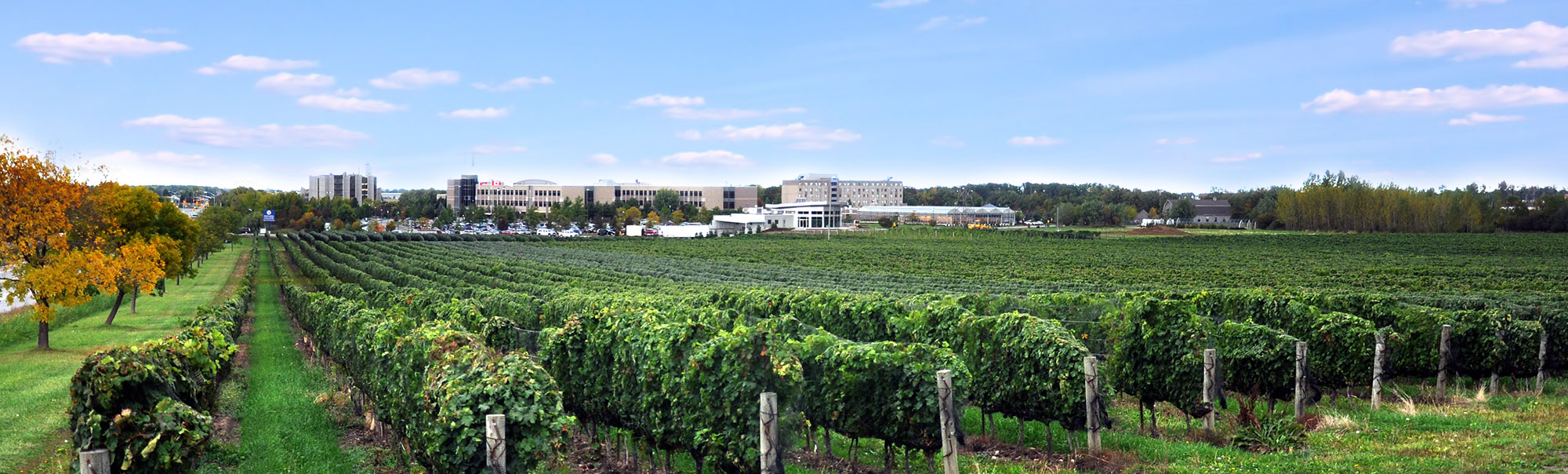 A view over the NC Teaching Winery Vineyards, toward the Niagara-on-the-Lake Campus
